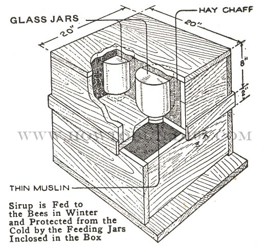 bee feeder plans