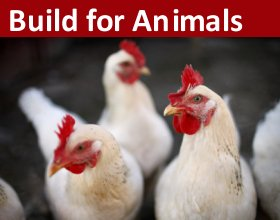 Build for Animals